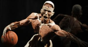 A work by Doctor Gunther von Hagens, anatomist, and creator of Body Worlds The Original Exhibitions of Real Human Bodie, known as Germany's 'Dr Death' , seen at an exhibition in Istanbul, Turkey, Friday, June 11, 2010. (AP Photo/Ibrahim Usta)